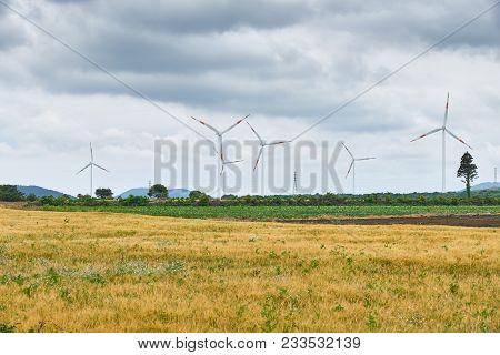 Yellow Barley Field With Wind Generators And Dynamic Clouds In Jeju Island, Korea.