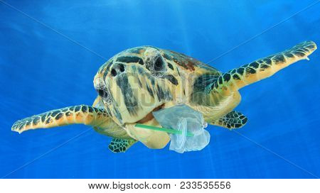 Plastic underwater pollution problem. Sea Turtle eating discarded plastic straw and bags. Environmental destruction  poster