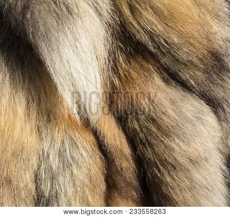 Fur Background Of Tails Of A Red Fox. Cruelty To Animals, Killing Animals For Profit. Protectors Of