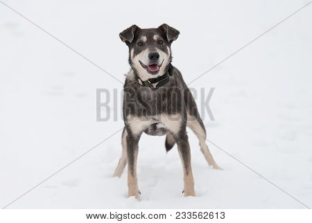 Mongrel Dog Playing In The