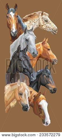 Vertical Postcard With Portraits Of Horses Breeds (trakehner Horse, Welsh Pony, Orlov Trotter, Arabi
