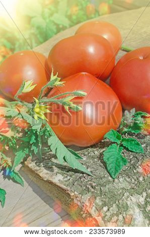 Ripe Red Organic Tomatoes