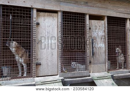 ST. PETERSBURG, RUSSIA - JUNE 30, 2017: Dogs in the shelter for homeless animals of the foundation Vernost. About 40 big dogs living in the shelter today