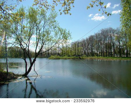 Spring Park Landscape With Pond And Tree