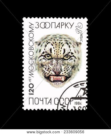 Soviet Union - Circa 1984 : Cancelled Postage Stamp Printed By Soviet Union, That Shows Snow Leopard