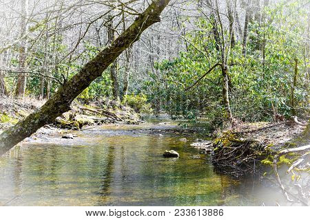 A rocky shallow river with water shadows and a dramatic bent tree in a white vignette border.