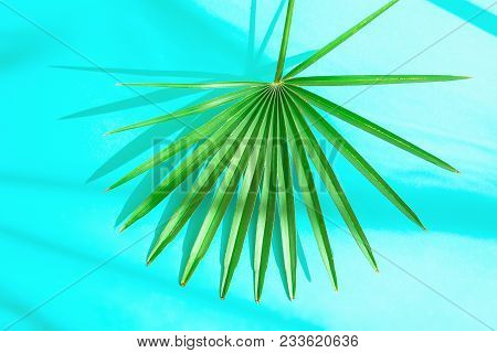 Beautiful Round Spiky Palm Leaf On Light Blue Background In Sunlight Leaks. Top View Flat Lay. Tropi