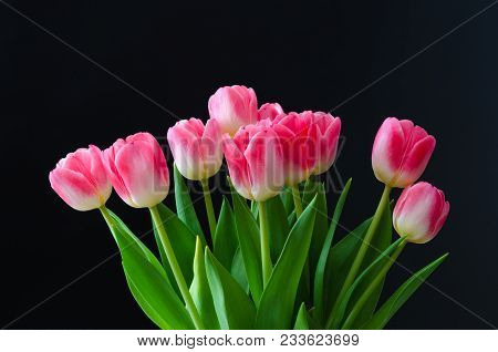 Beautiful Bunch With Bright Pink Tulip Flowers