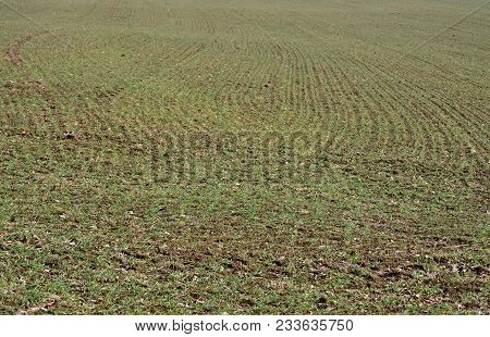 View Of Sown Fields , Southern Bohemia, Czech Republic