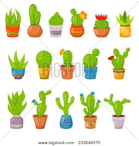 Set Of 16 Vector Cactuses And Succulents In Flower Pots. Home Cactus Plants With Prickles And Flower