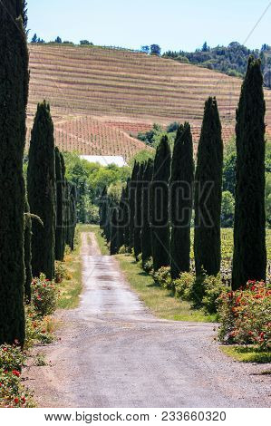 Road Leading Into A California Winery Near Alexander Valley