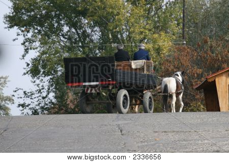 Old Coach With Horse