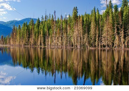 Forest Reflections, Idaho