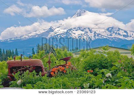 Rusting Tractor, Flowers, Mount-hood