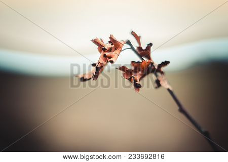 Deep Autumn Branch With Dry Leaves. Autumn Fall Branch In Park Wallpaper Or Background. Autummn Leav