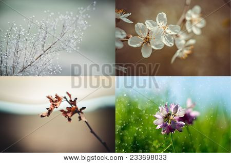 Spring, Summer, Autumn, Winter. Four Seasons. Four Season Collage With Branshes And Flower In Landsc