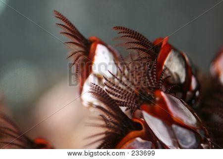 gooseneck barnacles poster
