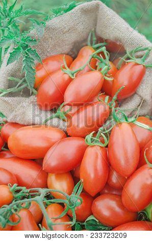 Fresh Red Plum Tomatoes