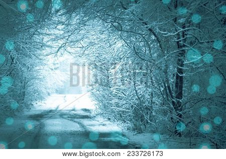 Forest Road Covered With Snow. Magical Snowy Road