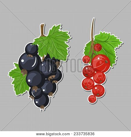 Vector Set Of Black Currant Red Colorful Illustration Sticker. Background Design For Tea, Ice Cream,