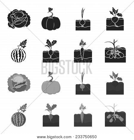 Watermelon, Radish, Carrots, Potatoes. Plant Set Collection Icons In Black, Monochrome Style Vector