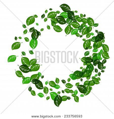 Frame Of Green Leaves. Element Decor For Advertising And Greeting Cards. Eco Friendly Concept. Flat