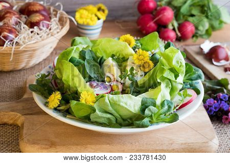 Spring Salad With Lettuce, Corn Salad, Radishes, Eggs And Wild Edible Plants - Coltsfoot, Daisy, Lun