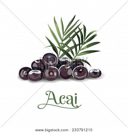 Acai Berries For Lables, Posers, Postcards And Others