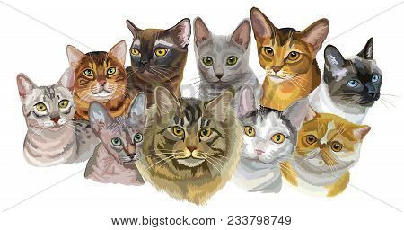 Set Of Colorful Vector Portraits Of Cats  Breeds (exotic Shorthair, Abyssinian, Bengal , Burmese, Eg