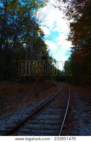 Abandoned Train Tracks With Fallen Foliage Around The Tracks.