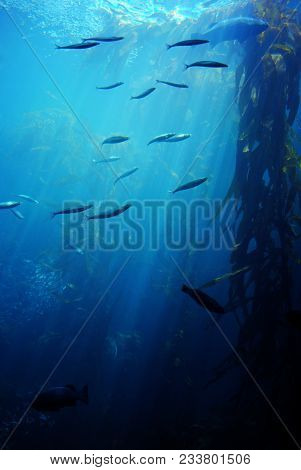 Underwater View Of Sea Life, Sea Plants And Rays Of Lights.