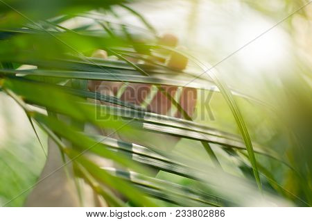 Woman Hand  Touches And Enjoy Green Palm Leaves Lit By The Sun. Concept Tenderness, Interaction, Uni