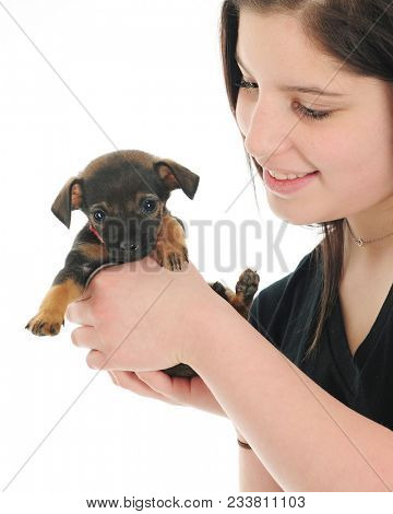 Close-up of a pretty young teen happily showing off her tiny mixed-breed puppy.  On a white background.