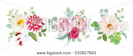 Garden Flowers Vector Design Bouquets.red Striped, Creamy Dahlia, Pink Ranunculus, Rose Flowers, Fre