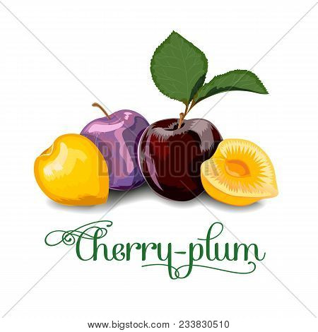 Cherry-plum Berries For Lables, Posers, Postcards And Others