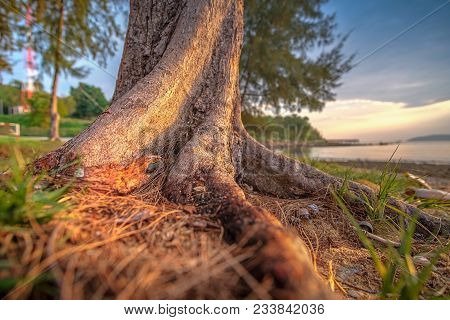 Close-up Stub Or Root Tree At The Beach.