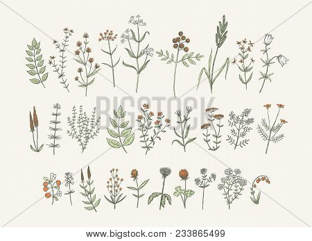 Set of sketchy hand drawn flowers. Vintage style field flowers and plants illustration collection. Creative vector floral elements for package of postcard decoration. poster