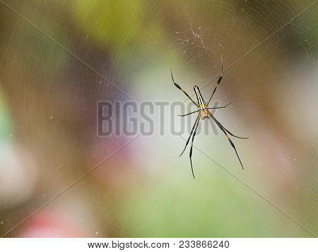 Small Black Red Spider On Web In Nature Waiting Bug Insect For Food.