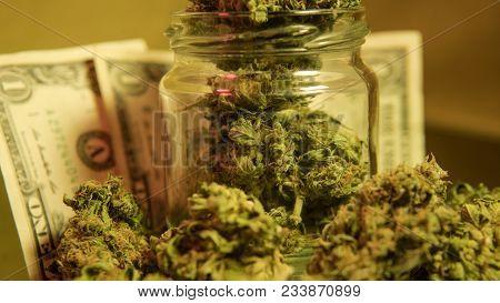 How To Grow Huge Marijuana Buds.   Marijuana Buds Harvest