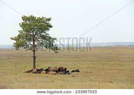 A Herd Of Sheep And Sheep Grazing In A Green Field.