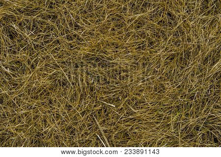 Dry Grass Texture Background. Green Grass And Dry Grass. Fresh Grass. Abstract Nature Background