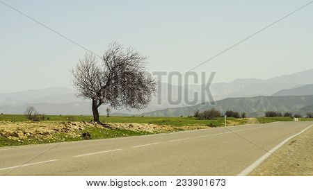 Spring Landscape With Only Tree On A Road