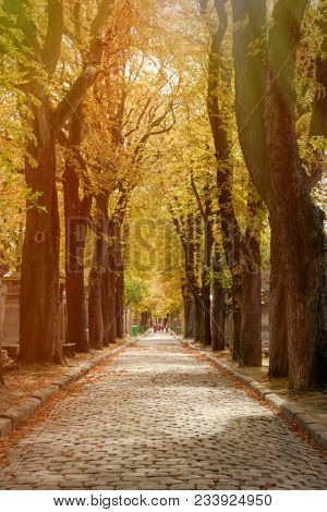 The Pere Lachaise cemetery in Paris in autumn with tress covered in yellow leaves