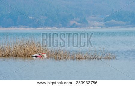 Small Single Passenger Seaplane Laying Upside Down On River Sandbar Covered With Reeds With River An
