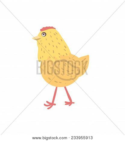 Chick Hand Drawn Illustration Isolated On White Background. Cute Farm Animal, Domestic Livestock In