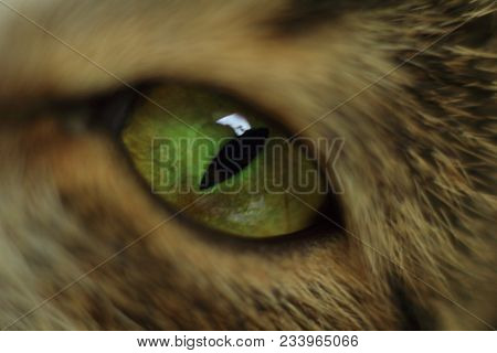 Cat's Eye - Close-up. Details Of A Cat's Eye Looking Directly At Camera