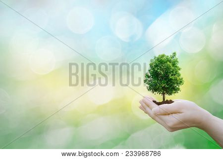 Ecology Concept Human Hands Holding Big Plant Tree With On Blurred Sunset Background World Environme