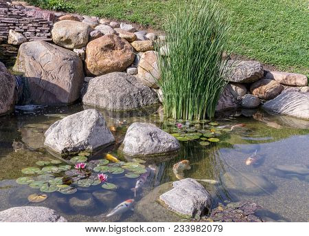 Decorative Fish Swim In Pond With Waterfall. Sunny Day