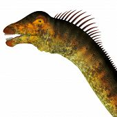 Barosaurus Dinosaur Head 3D Illustration - Barosaurus was a herbivorous sauropod dinosaur that lived in Utah and South Dakota, USA in the Jurassic Period. poster