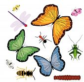 various colorful bugs and butterfly vector illustrations poster